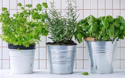 Rośliny oczyszczające powietrze w naszych domach